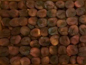 Курага коричневая (Лечебная)