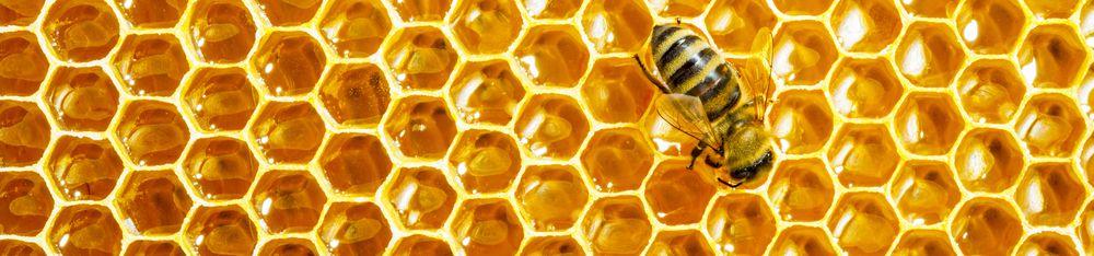 Мёд (КЛЕНОВЫЙ) пчелопродукты «МЕДОВЕЯ»