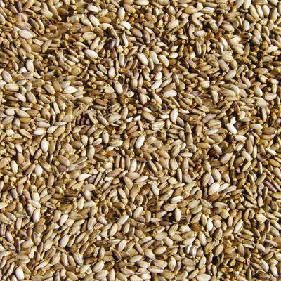 Семена РАСТОРОПШИ (Кубань)
